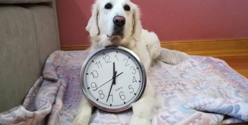La ciencia lo confirma: tu mascota sabe perfectamente qué hora es