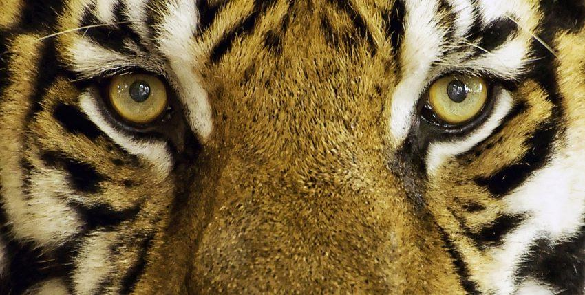 Somos la última generación que puede salvar la fauna silvestre, según WWF