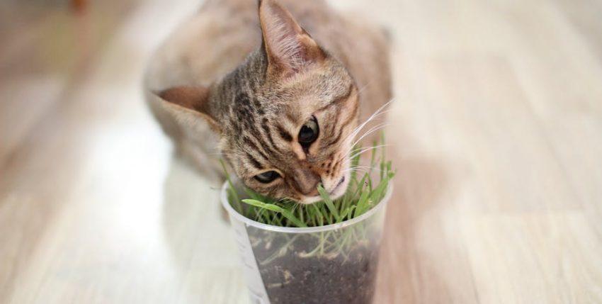 La verdad sobre gatos y perros: ¿por qué comen hierba nuestras peludas mascotas?